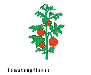 tomatenpflanze_dwg.png